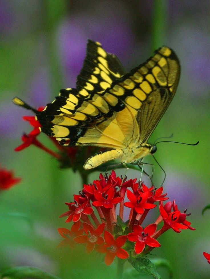 Attract Butterflies To Your Landscape