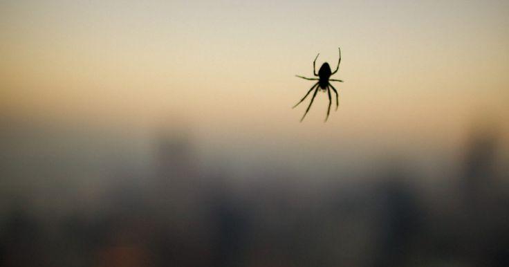 Comparación de la viuda negra con la araña espalda roja. Tanto la araña de espalda roja como la viuda negra pertenecen al género de las arañas lactrodectus. Tienen marcas rojas en el abdomen y es esférico. Sin embargo, a pesar de esas similitudes las arañas son completamente diferentes. Una vez que comprendes cuales son las diferencias entre éstas dos no volverás a confundirlas.