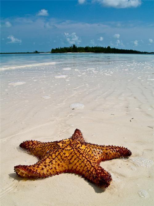 Starfish on the Beach, Isla de la Juventud, Cuba where my mom was born