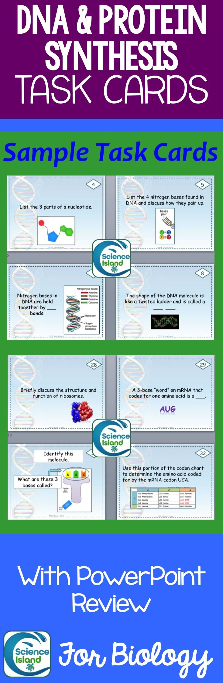 dna replication transcription and translation essay This process is done through dna replication which requires transcription and translation processes during replication, the dna unwinds, as aided by the dna polymerase, and generates two identical dna molecules.