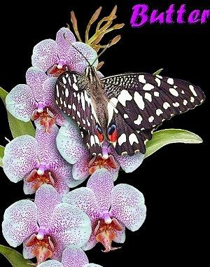 Butterfly and Orchid Garden, Thames, New Zealand