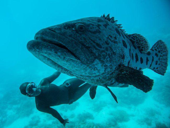 Free diving on #GreatBarrierReef. https://www.facebook.com/media/set/?set=a.10151046389230098.426955.26225930097=1