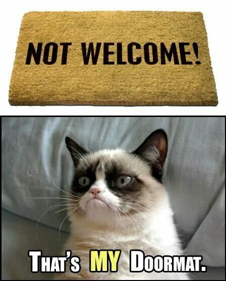Funny Cat Sayings Quotes: 2500 Best Grumpy Cat Images On Pinterest