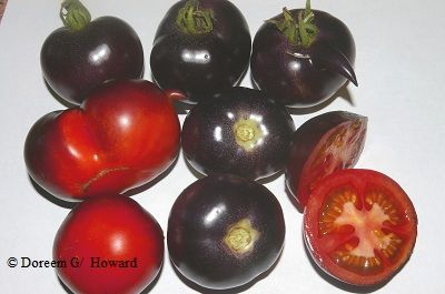 2013 garden catalogs are here! Doreen's top plant picks for edibles: favorite tomatoes, lettuce, and vegetables.