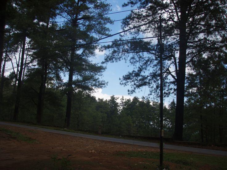 Hutan Pinus, Malino Gowa, South Sulawesi, Indonesia