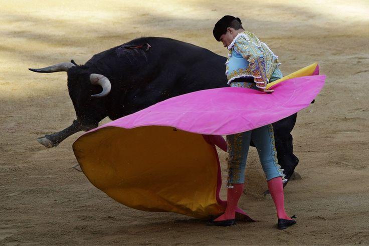 Bull Fight - Pamplona, Spain