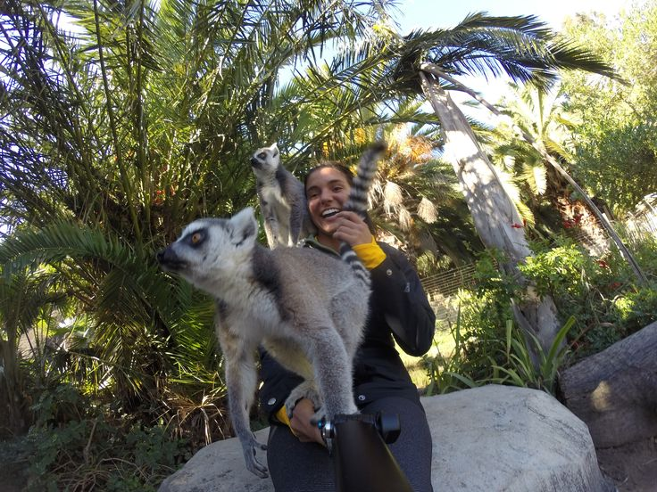 By Savanna Fonkert This is a picture of me hanging out with some lemurs from Cango Wildlife Ranch in Oudtshoorn, South Africa. All the animals at Cango are rescued and live in an open, natural environment. We were able to play with lemurs, pet cheetahs, and even cage dive with crocodiles if we were brave enough. We visited Cango Wildlife Ranch during the first week we arrived in South Africa during the Garden Route Tour. The lemurs decided that my GoPro stick was a branch, so I had to hold…