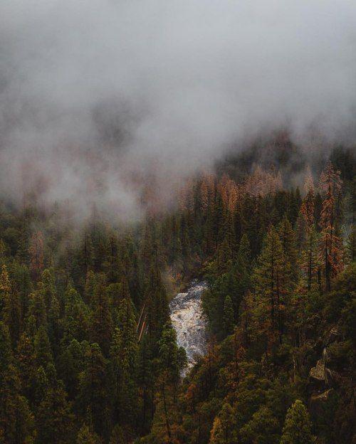 Best 25 Rainforest biome ideas