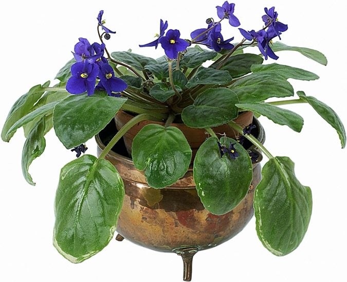 34 best Indoor Gardening Projects and Advice images on Pinterest