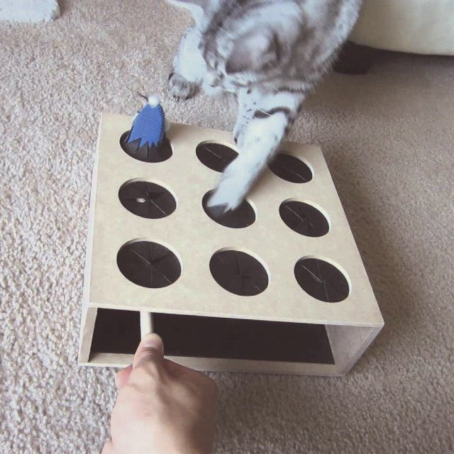 15 best jouets pour chats images on pinterest toys for - Diy jouet pour chat ...