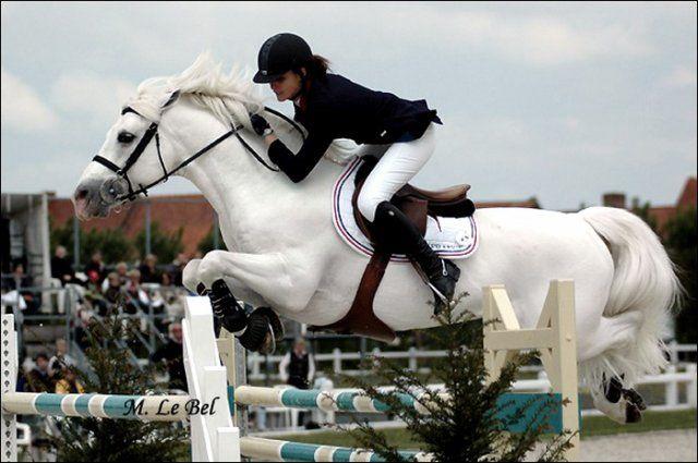 Dexter Leam Pondi, 1991 Connemara Pony stallion by Leam Finnigan.