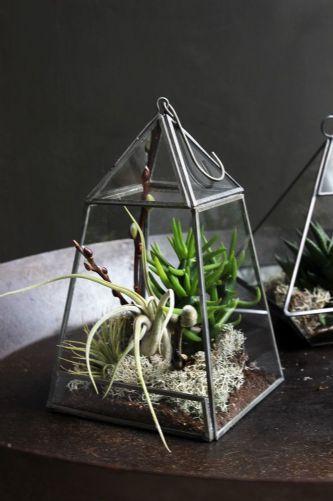 Aculo Hanging Terrarium Planter