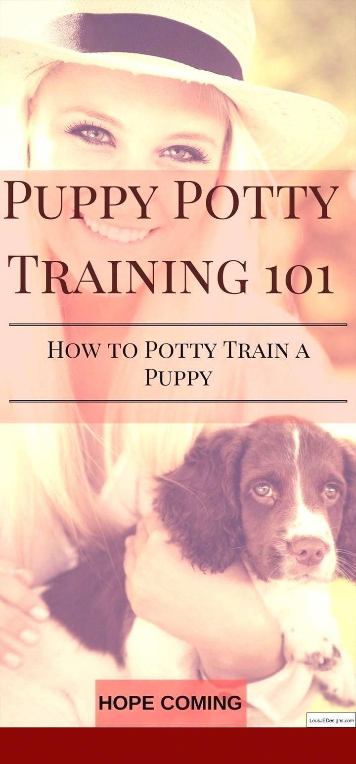 Dog And Puppy Tips How To Help Your Dog Learn To Handle Being