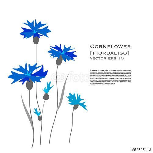Vector: #Fiordaliso #illustrazione floreale #cornflower #flower #flora #design #illustration