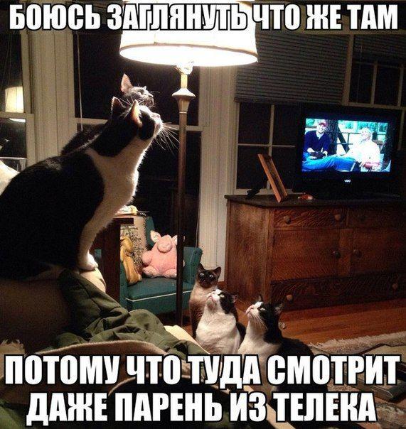 Про котов | Смешные животные, Смешные мемы о кошках ...