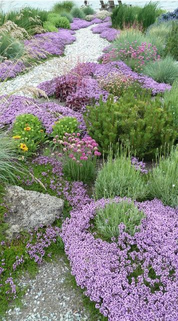 Purple thyme with lavender pine blanket flowers clumps for Beautiful gardens and maintenance