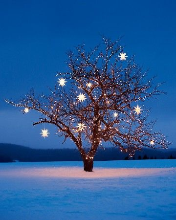 Christmas Star Lights Outdoor 87 Best Christmas Lights Images On Pinterest  Christmas Lights
