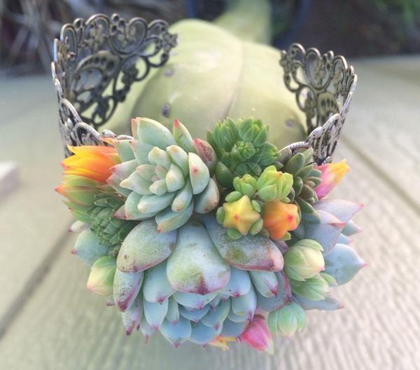 succulent cuff corsage bracelet live wholesale succulents. Black Bedroom Furniture Sets. Home Design Ideas