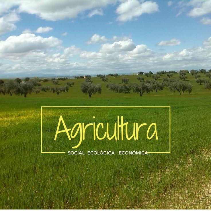 La agricultura climáticamente inteligente (CSA - Climate Smart Agriculture), fue definida y presentada por la FAO en la Conferencia de La Haya sobre Agricultura, Seguridad alimentaria y cambio climático en 2010, contribuyendo al logro de los objetivos de desarrollo sostenible.  La CSA integra las tres dimensiones del desarrollo sostenible (económico, social y medioambiental) abordando la seguridad alimentaria y los desafíos climáticos.