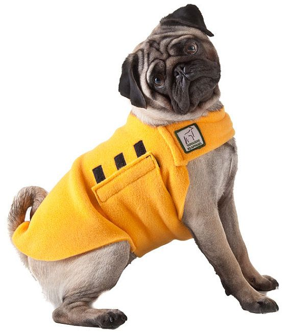 finally a velcro jacket that can fit pugs!