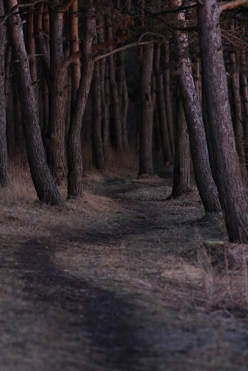 """1/23/2013    Now this makes me think of the play """"Into The Woods"""" or maybe """"Little Red Riding Hood"""" I love the eery and spooky feeling of this"""