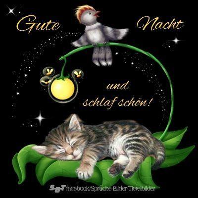 Gute nacht und schlaf schön bilder