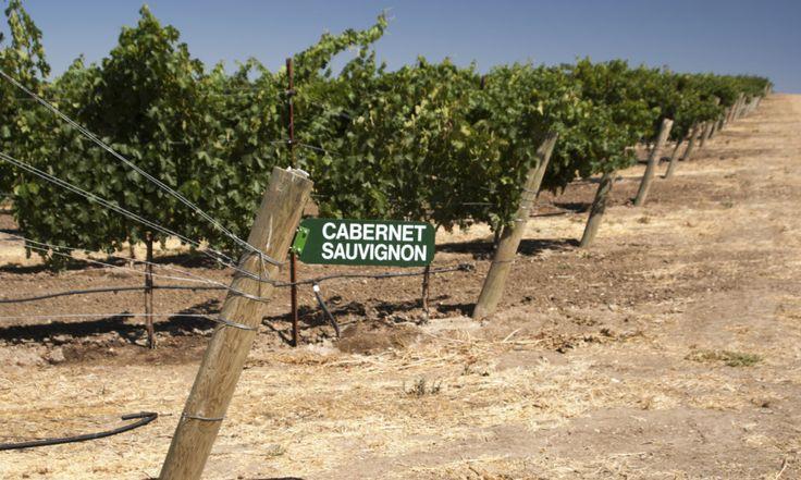 Episodio 08. Cabernet Sauvignon | Vino Para Principiantes