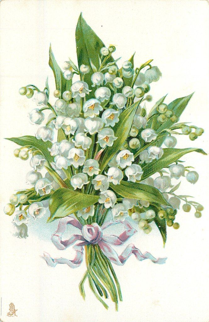 Pinterest Vintage Illustrations Lily Of The Valley And Lilies