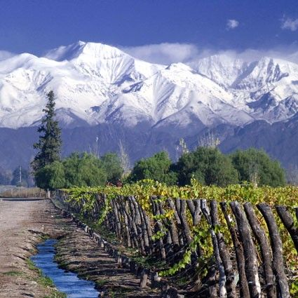 Vineyards and snow capped Andes mountains of #Mendoza #Argentina