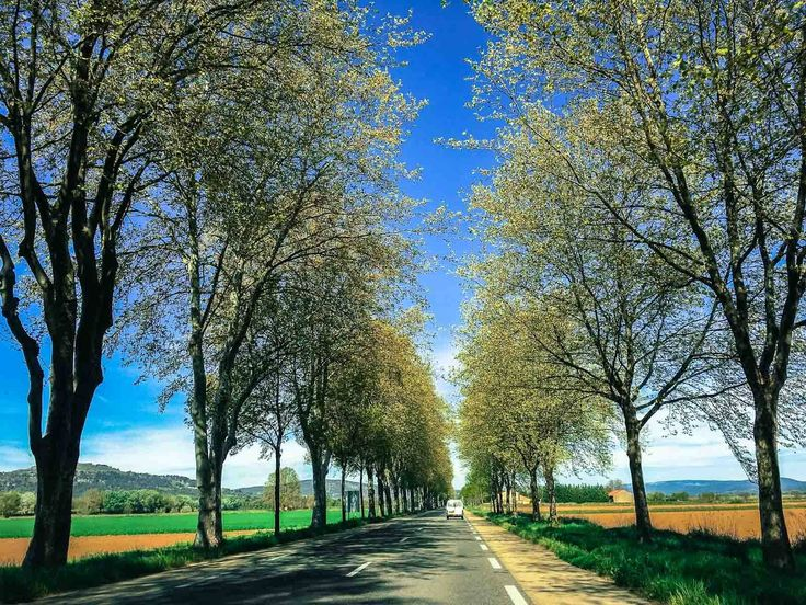 Beautiful tree-lined road in Southern France