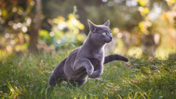 Cómo ahuyentar gatos