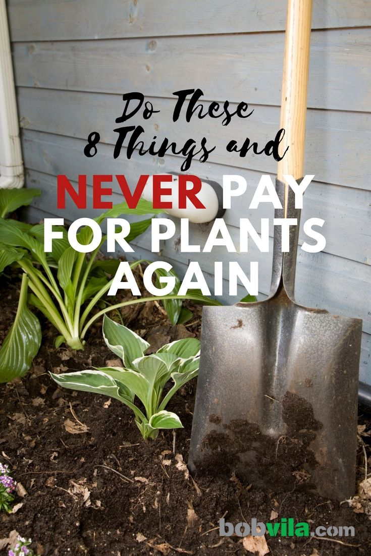 Do These 8 Things And Never Pay For Plants Again Hydroponic