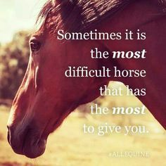 The best difficult horses are often the best teachers