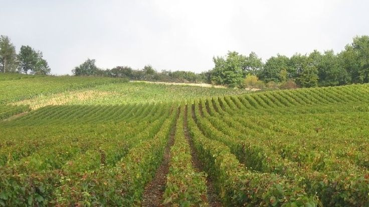 Tips on boutique houses to visit. Day Trip from Paris: La Route du Champagne - Follow the fizz on this trail to the Champagne region's best family run champagne houses - Time Out Paris