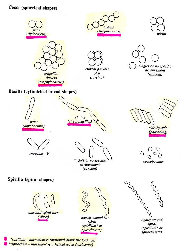 10 best homeschooling biology images on pinterest biology homeschooling and life science. Black Bedroom Furniture Sets. Home Design Ideas