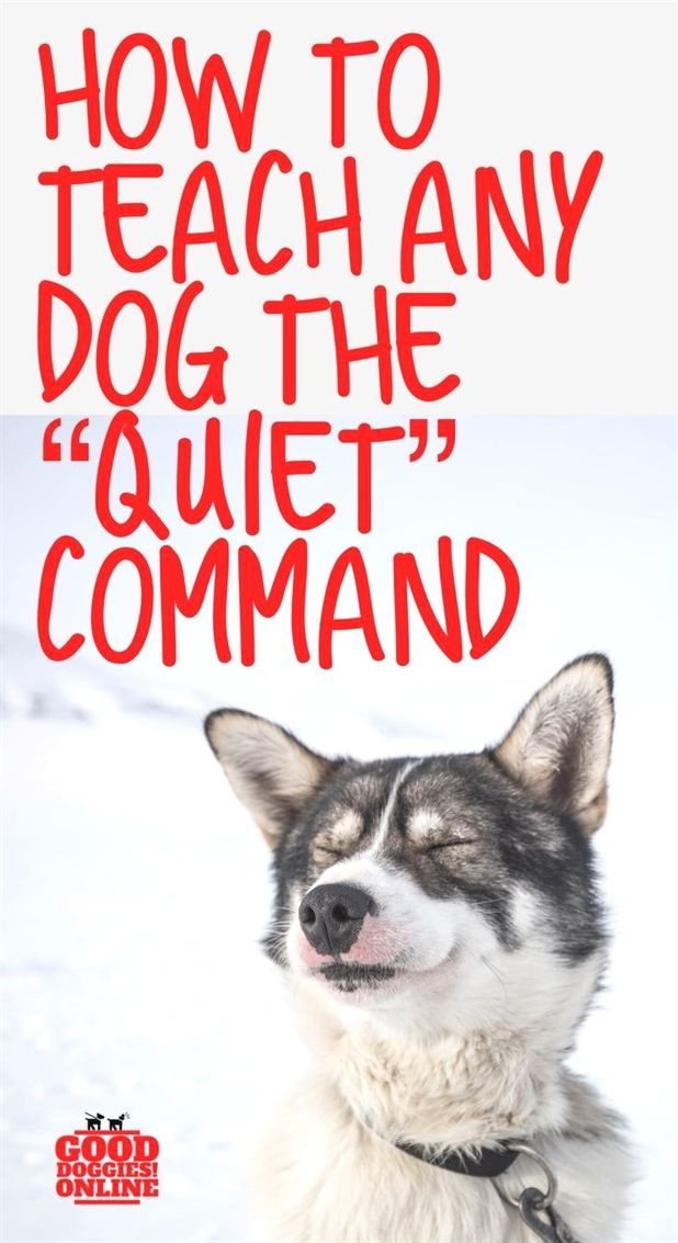 Dog Training For Dummies Book Dog Training Zone Dog Training