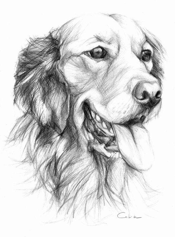Line Drawing Pet Animals : Golden retriever pet portrait original pencil by