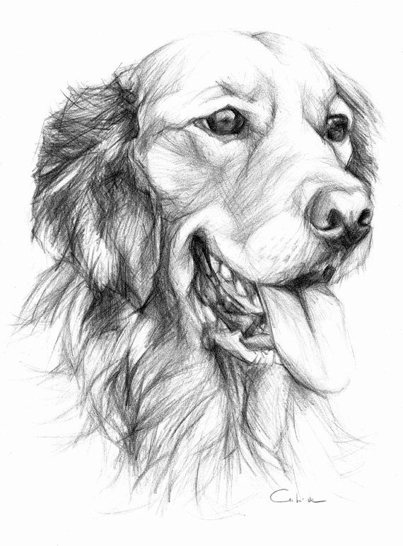 Golden Retriever Pet Portrait Original Pencil by PETARTPortraits, $25.00