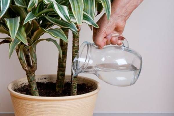 10 titok a szobanövények gondozásához, ha te is egész télen pompázó virágokra vágysz!