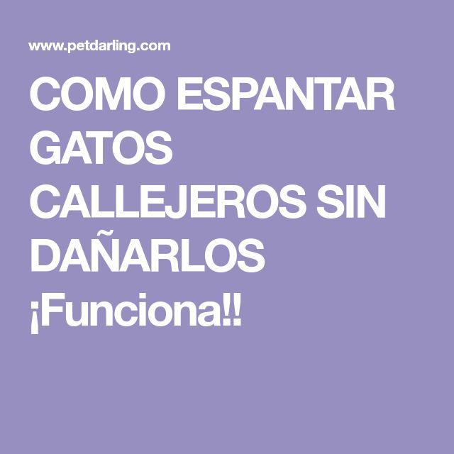 COMO ESPANTAR GATOS CALLEJEROS SIN DAÑARLOS ¡Funciona!!