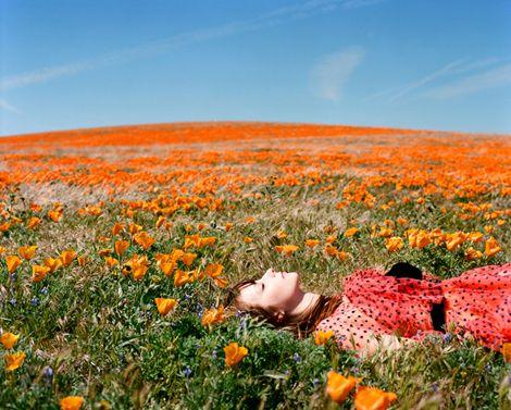 sinking in flowersFields Of Flower, Buckets Lists, Orange Flower, Secret Places, Fields Of Dreams, Poppies, Flower Photos, Flower Beds, Flower Fields