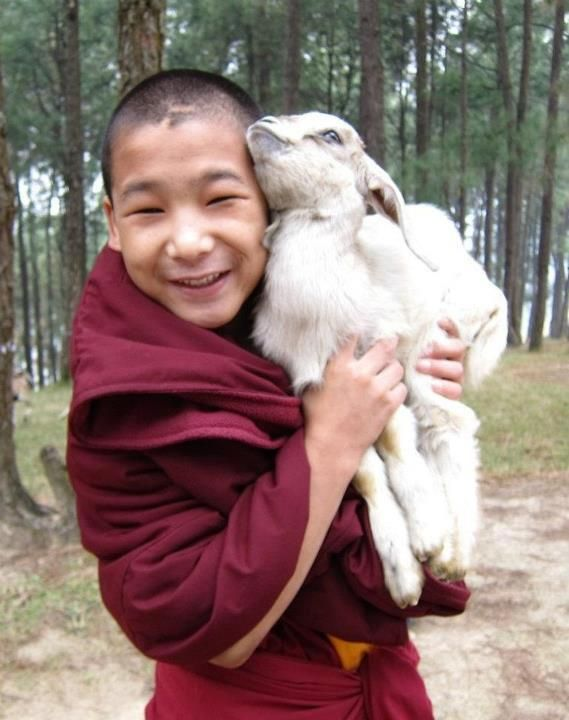 Young Buddhist monk with goat, Tibet
