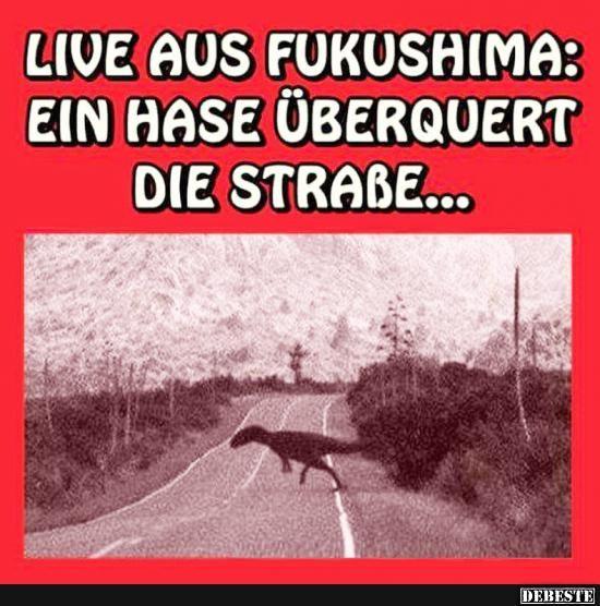 Live aus Fukushima: Ein Hase überquert die Straße..