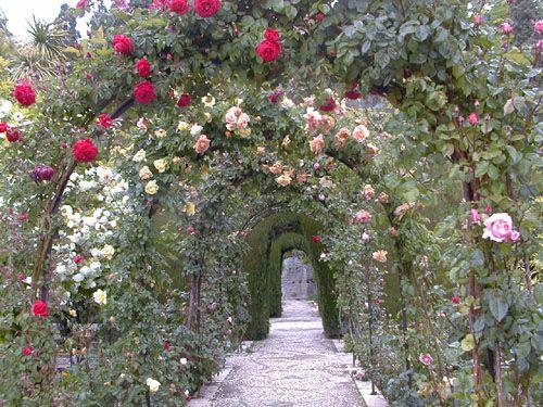 17 mejores ideas sobre arcos de jard n en pinterest arco - Arcos para jardin ...