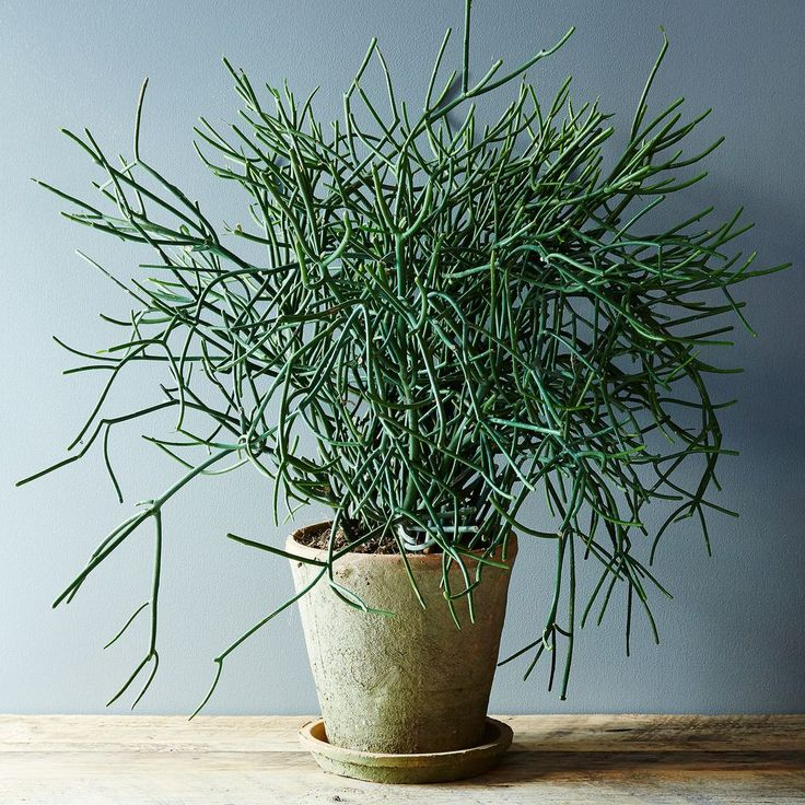 """These 5 houseplants are harder to kill than they are to keep alive. And that means they'll keep your home looking great, even if you forget to water them or you give them too much """"love."""""""