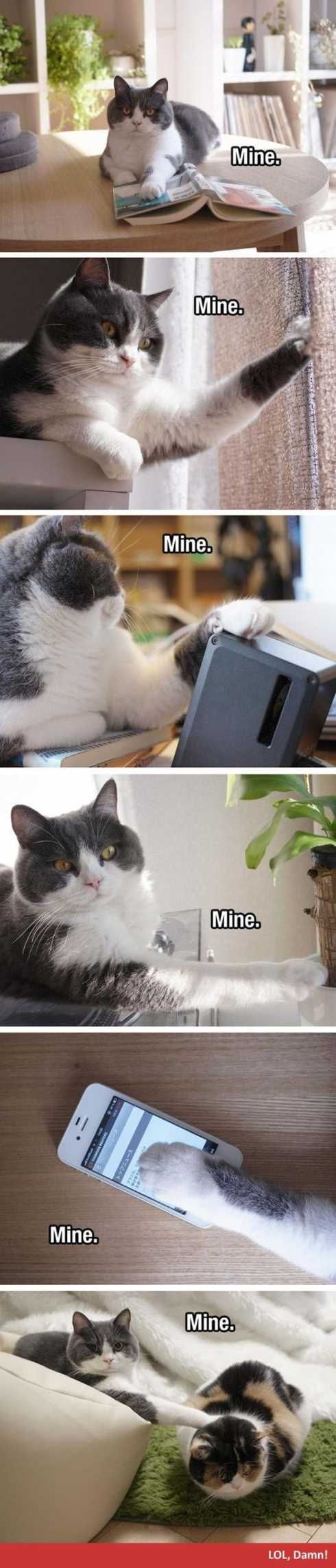 66-funny-pictures-you-will-absolutely-love-064