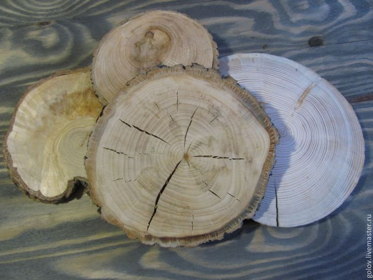 Купить спилы дерева - спилы дерева, деревянные спилы, пеньки, деревянный декор, украшение интерьера