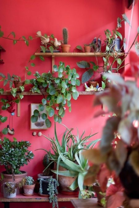 beautiful pink wall and so many plants!