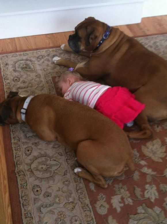 We sleep next to you because we love you little human. This is Cooter Brown and Bailey An with our Brenton! They watch over him as he sleeps or plays in the floor ((: