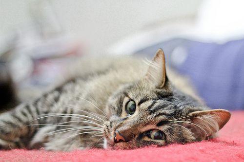 Sleppy cat